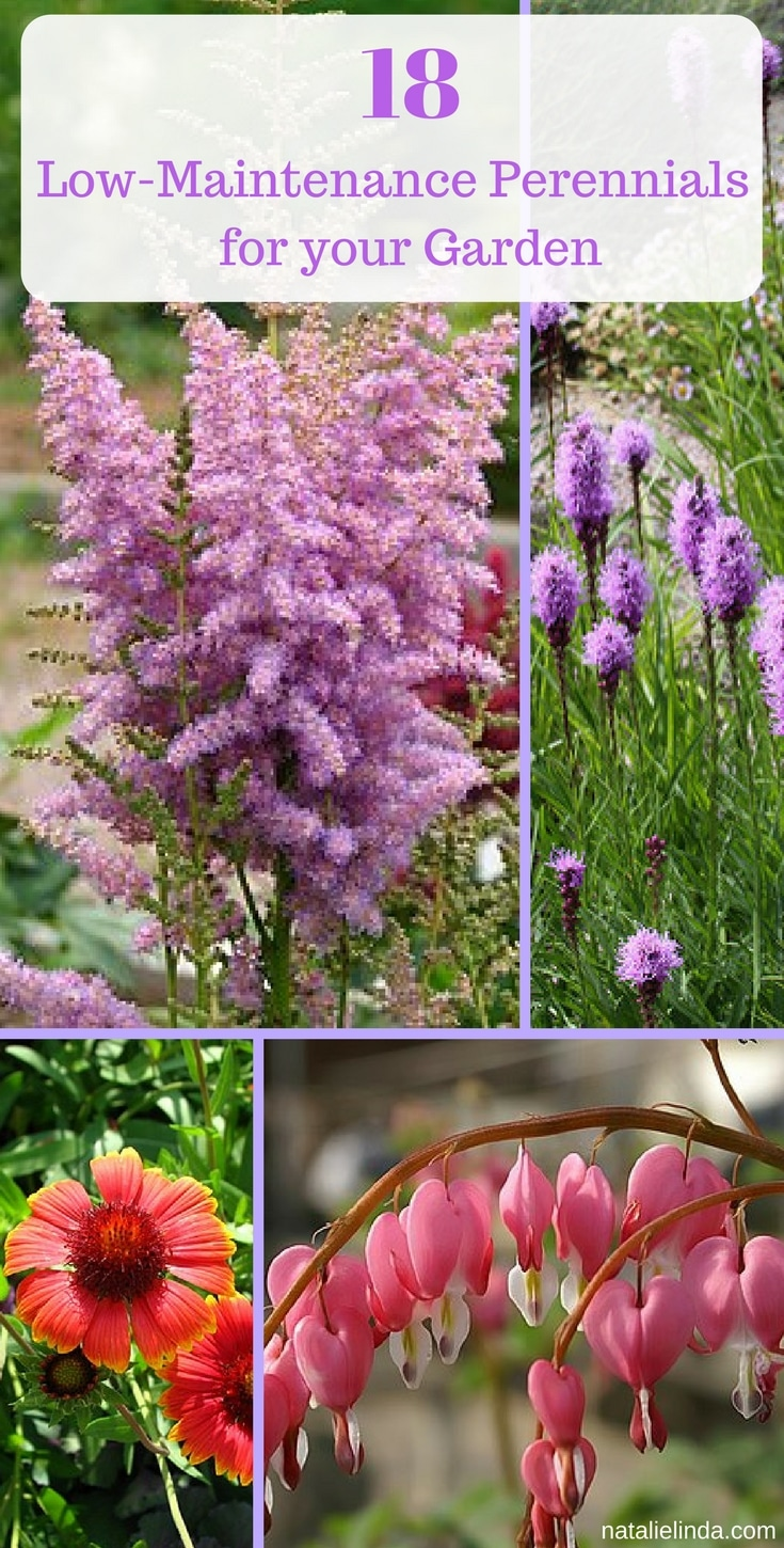 These 18 Low Maintenance Perennials Make Flower Gardening So Easy. Theyu0027re  Perfect For