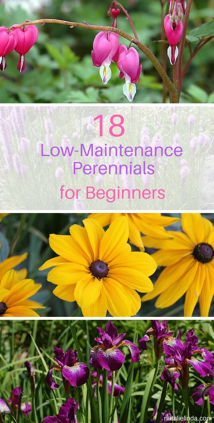 18 low maintenance perennials if you have an outdoor space that you want to fill with rich pops of color height and texture then youll want to pay attention to the list below mightylinksfo