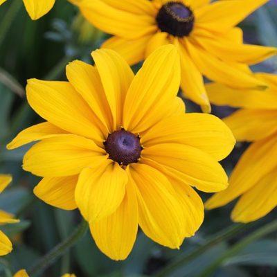 18 Low-Maintenance Perennials For Your Garden