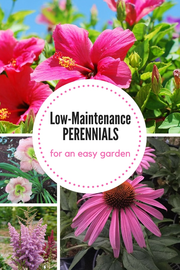 Try growing these low-maintenance perennials for a beautiful yet easy-to-grow garden!