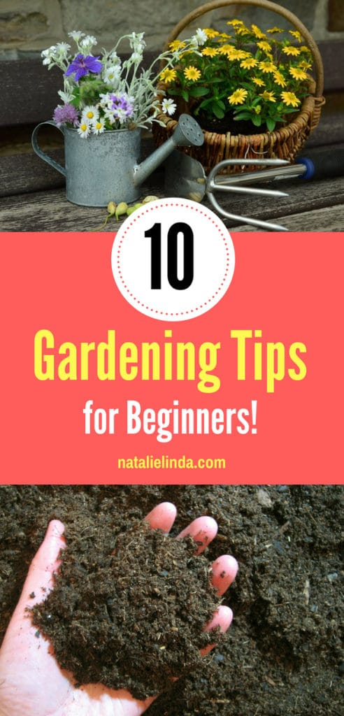 Take a look at these top 10 tips that will make you a better gardener!