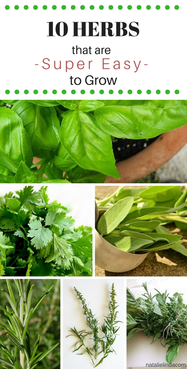 These 10 herbs are super easy to grow, even for beginners!