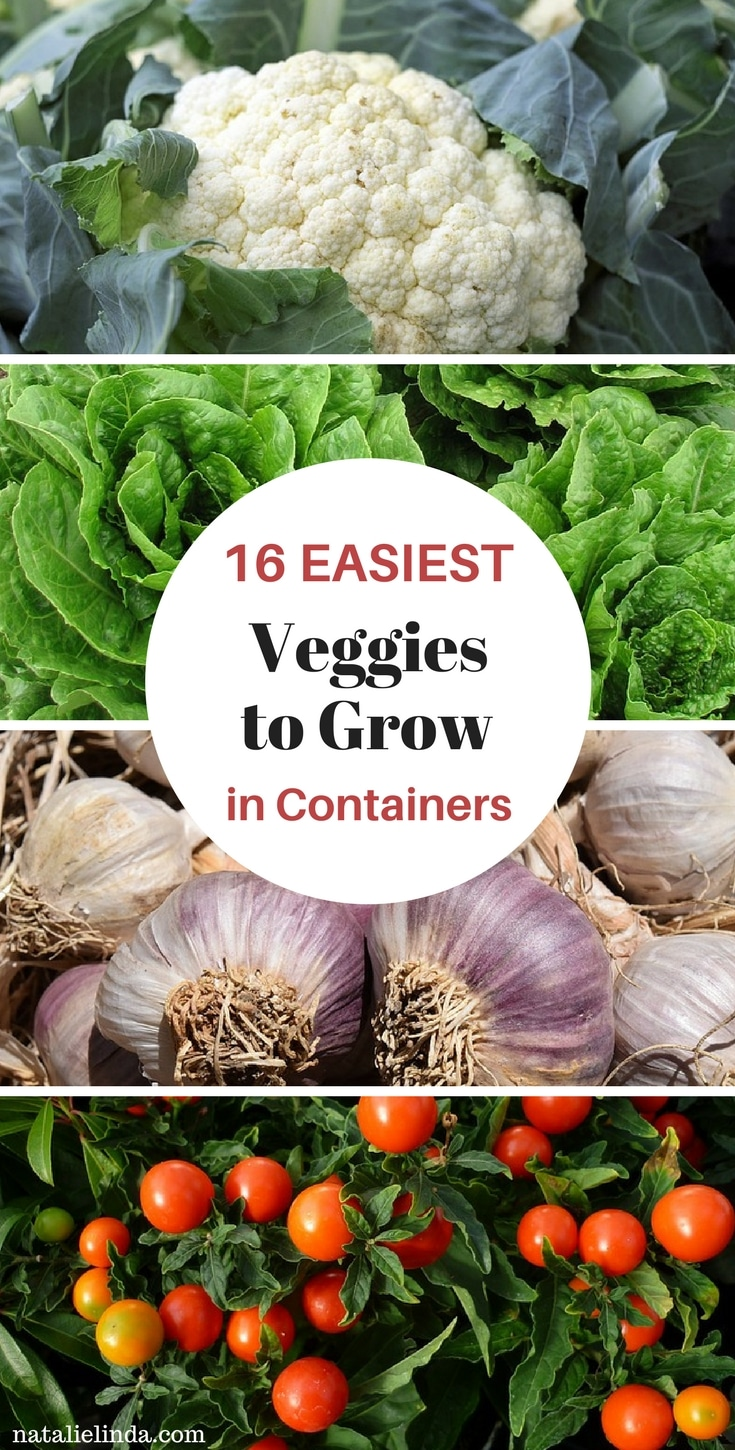 These 16 vegetables are so easy to grow in containers. If you live in an apartment or have limited space, container gardening is the perfect solution!