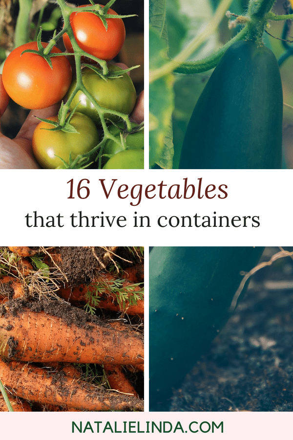 These 16 vegetables grow beautifully in containers or pots! If you don't have room in your yard or live in an apartment with a balcony, just grow these veggies in a pot!