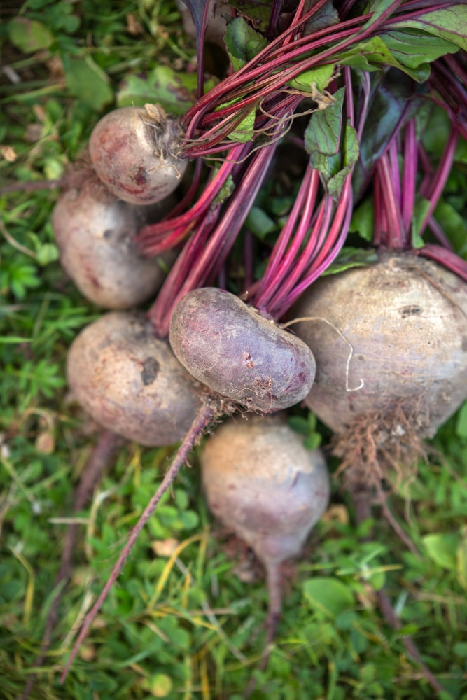 Beets are vegetables that can grow in containers!