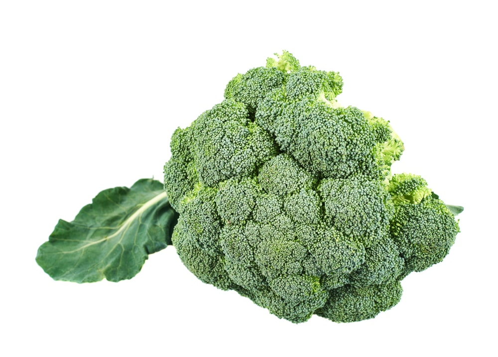 Broccoli is a vegetable that thrives and grows in containers!