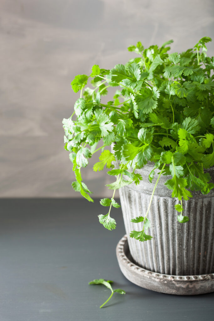 Learn about easy-to-grow herbs with this helpful list!