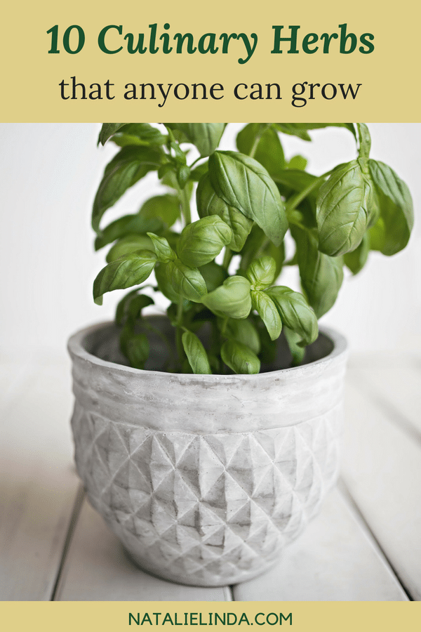 These culinary herbs are easy to grow and they're perfect for gardening beginners who love to cook!
