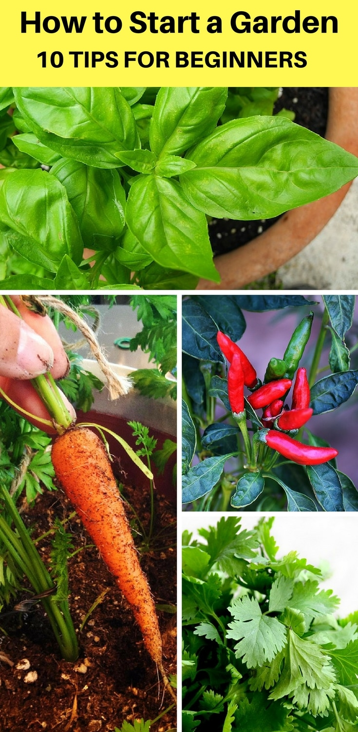 Top Gardening Tips For Beginners