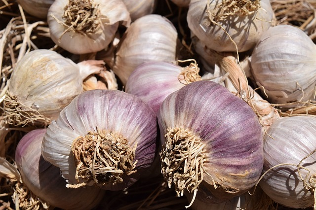 grow garlic in containers