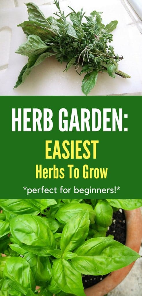 These herbs are SO easy to grow! Take a look to see which herbs you should be adding to your garden so you can have a good supply of fresh herbs for cooking!