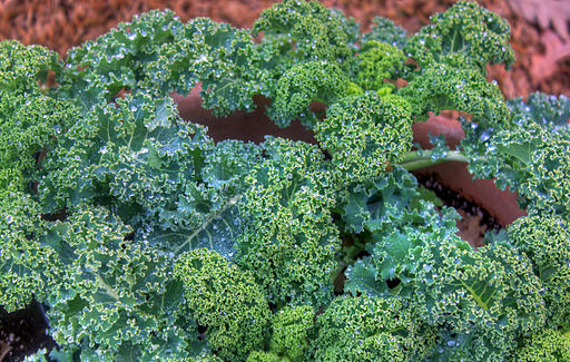 Kale in Containers