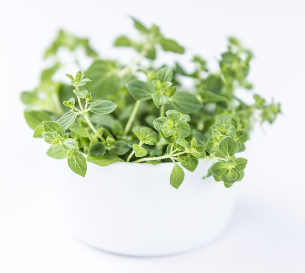 Learn about these easy-to-grow herbs!