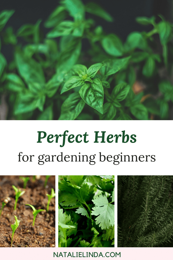 These 10 herbs are perfect for beginners who want to start their own herb garden!