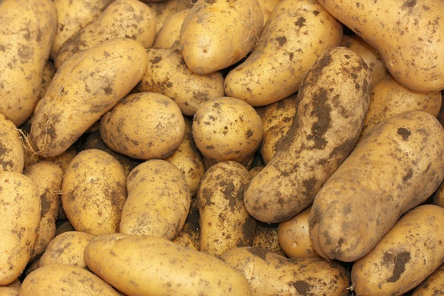 Potatoes in Container