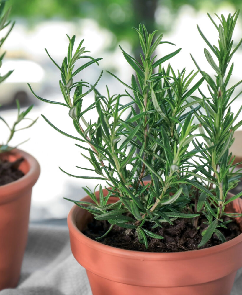 These herbs are easy to grow!