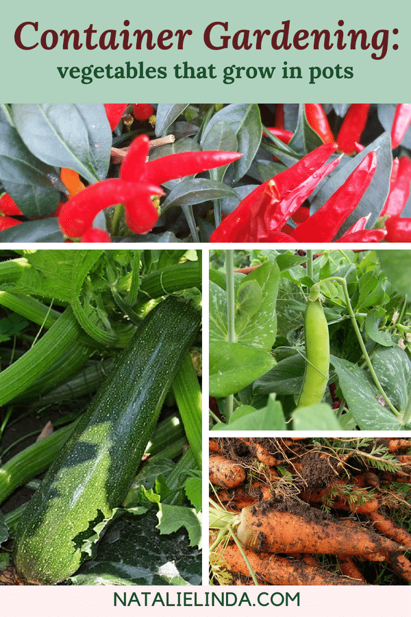 Grow these vegetables in pots for full harvest! These veggies thrive in containers!