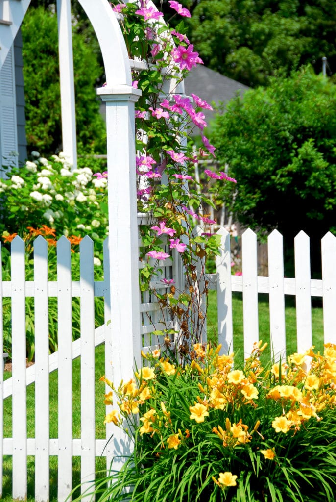 Learn how to grow Clematis flower vine!