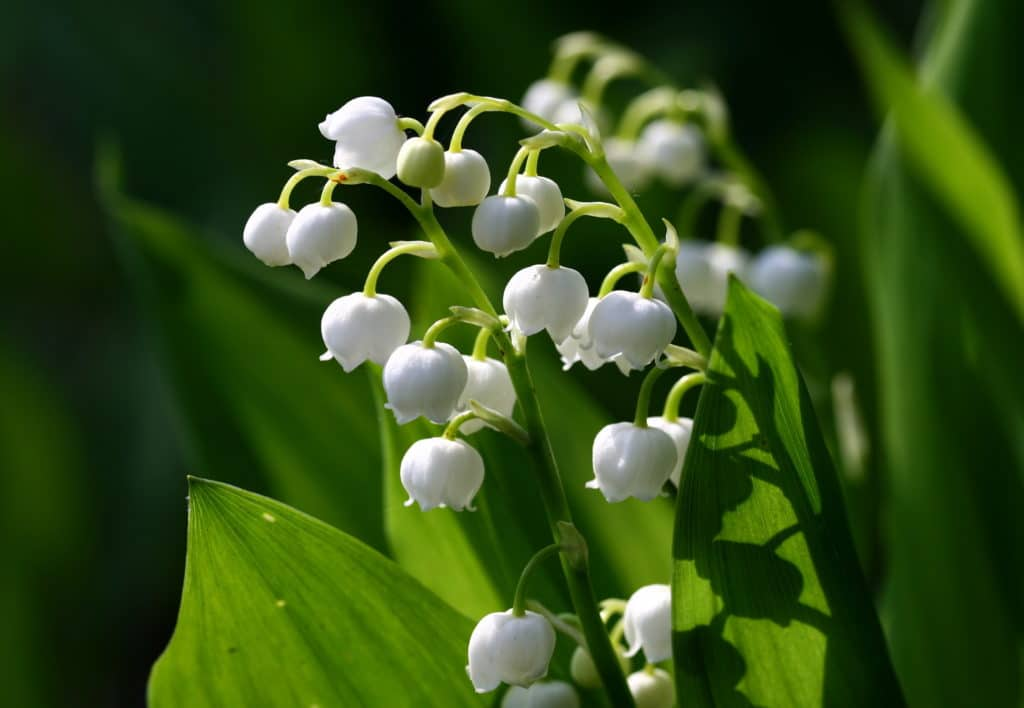 Plant these flowers in your garden for an extra fragrant garden!