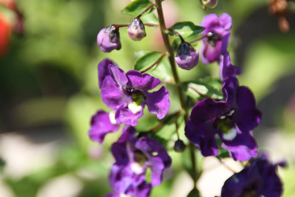 Annuals that bloom all summer and fall