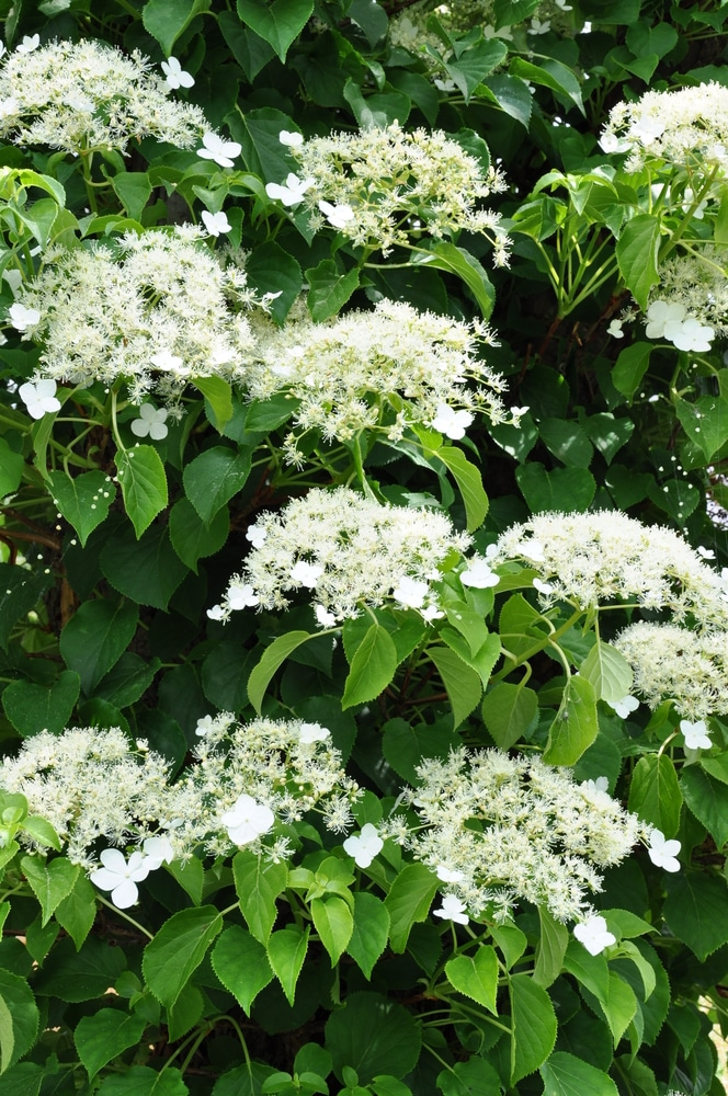 Beautiful climbing vines for your garden