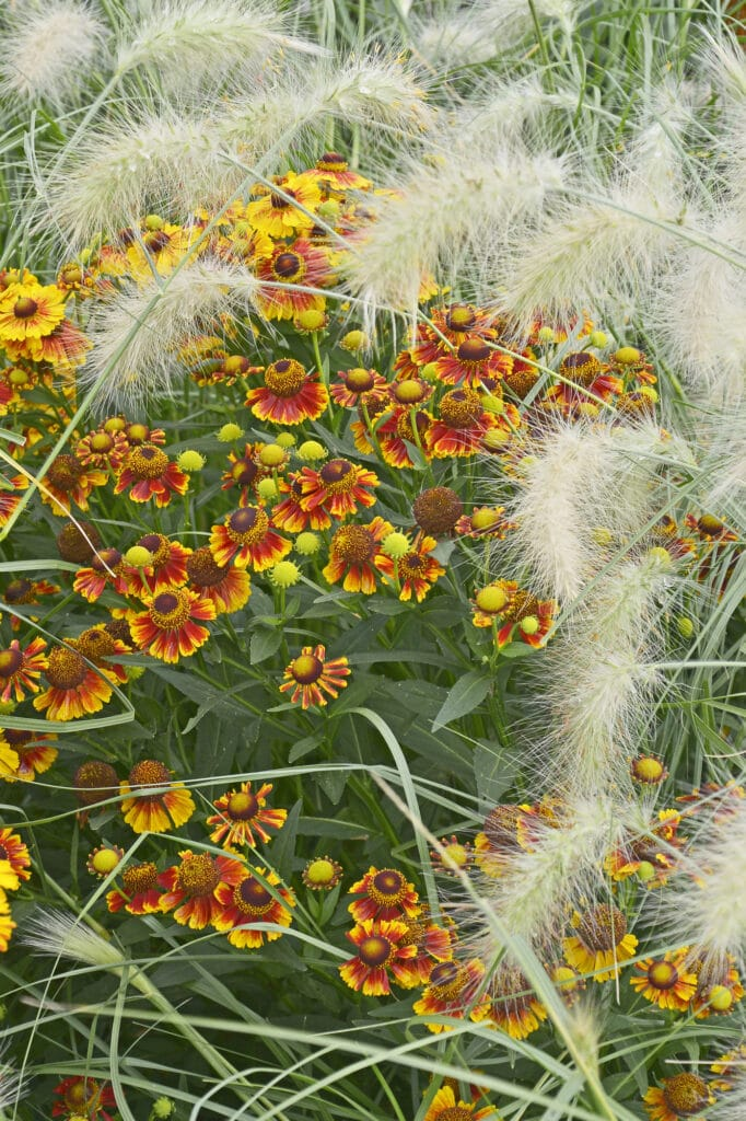Check out this list of colorful Fall perennials!
