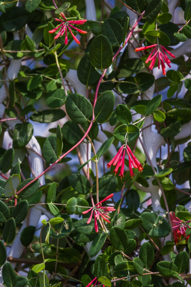 Beautiful climbing vines for your yard