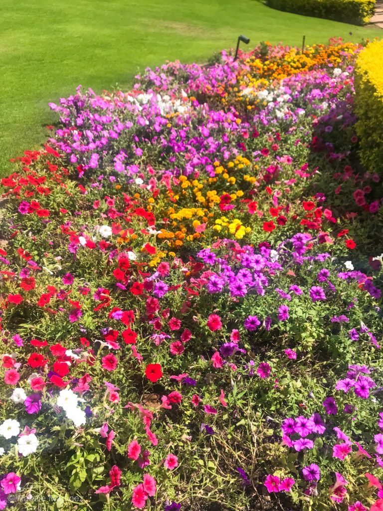 This mixed bed of annuals bloom all Summer long!