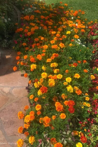 Marigolds can actually repel bugs and mosquitoes, so plant them with your herbs and vegetables to keep them away!