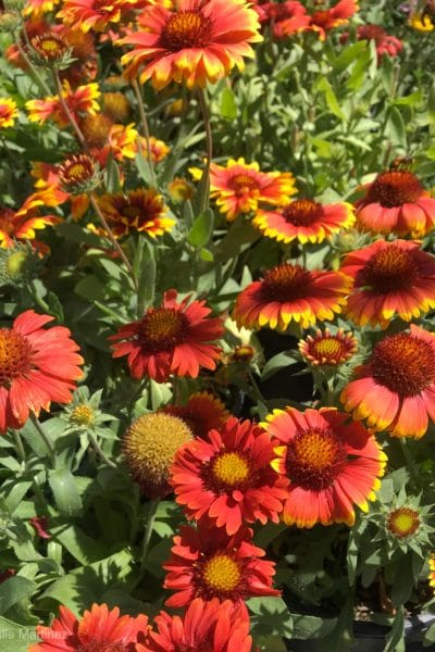 18 Low-Maintenance Perennials For Your Garden