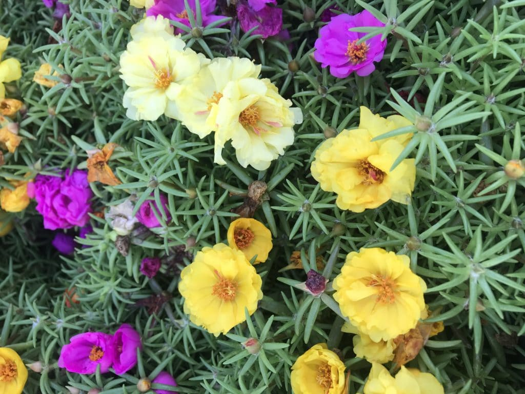 Summer blooming Annuals