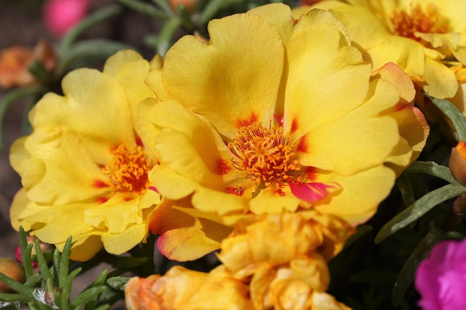 Annuals that bloom all summer long
