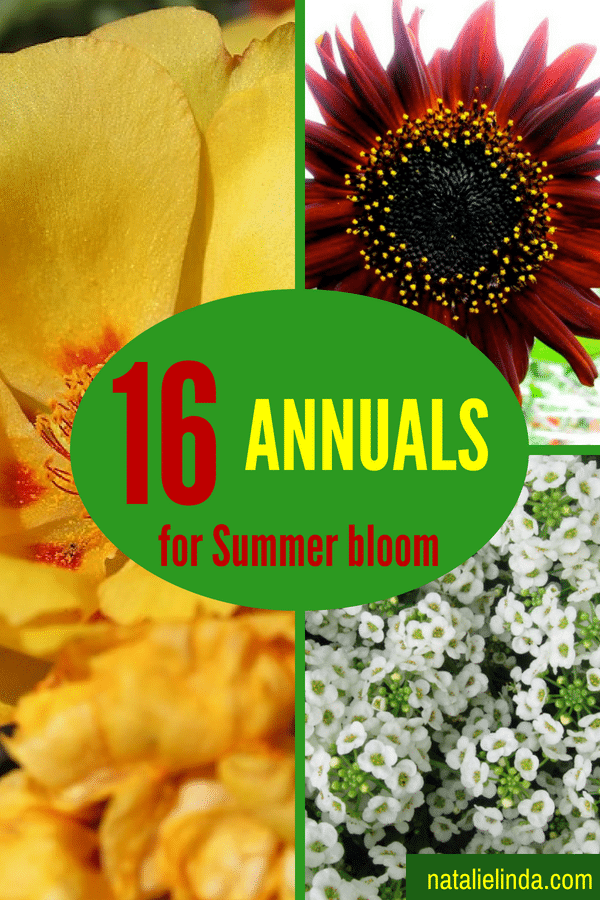 These 16 annuals will bloom in your garden ALL SUMMER long and some will continue to bloom into Fall!