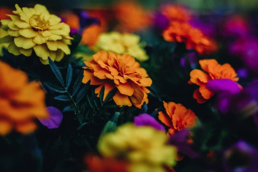 Fall Perennial Flowers