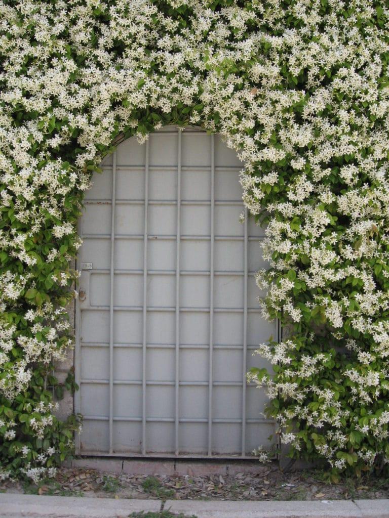 Grow these flowering vines in your garden!