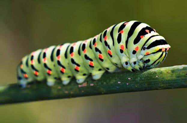 How to Keep Garden Pests Out of Your Garden
