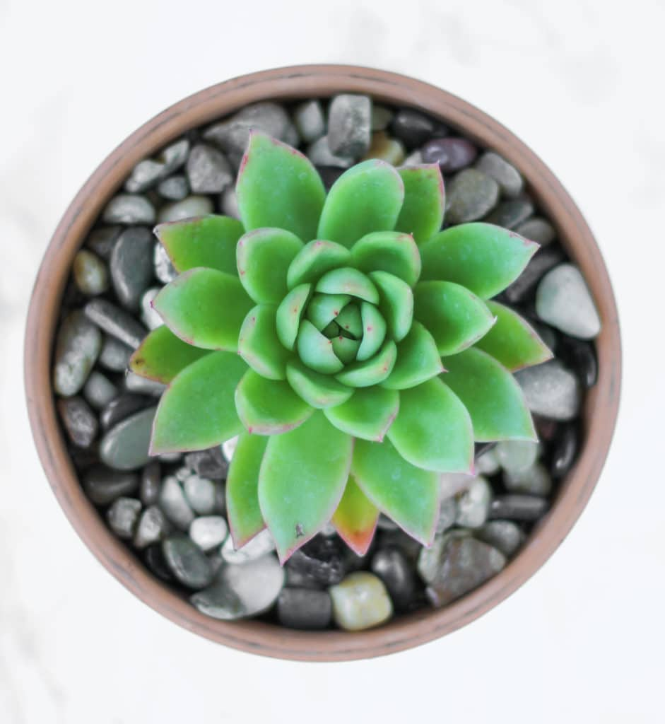learn how to grow succulents!