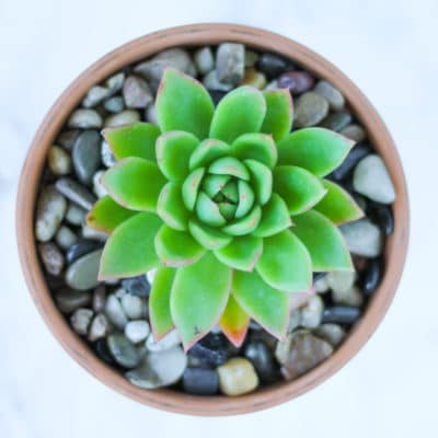 Succulents 101: How to Care for Succulents