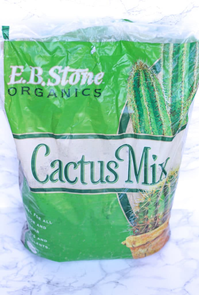 cactus mix for caring for succulents