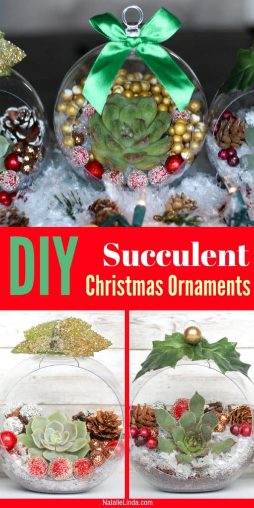 These Christmas ornaments with live succulents are beautiful, easy to make, and the perfect complement to traditional ornaments! Learn how to use your succulents to make these adorable ornaments for your Christmas tree this year!
