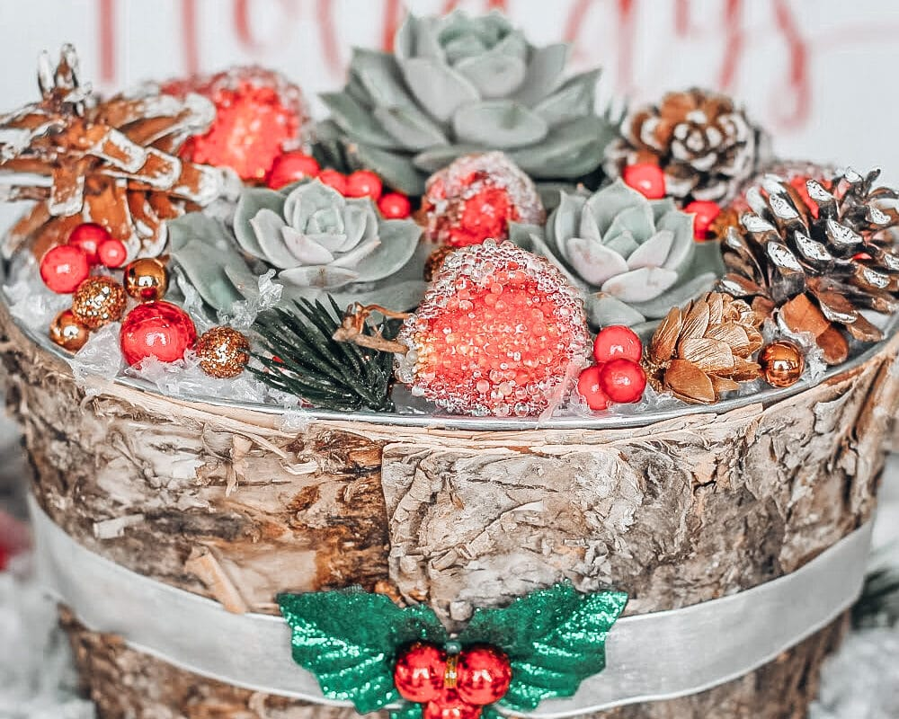 Succulents Christmas Craft