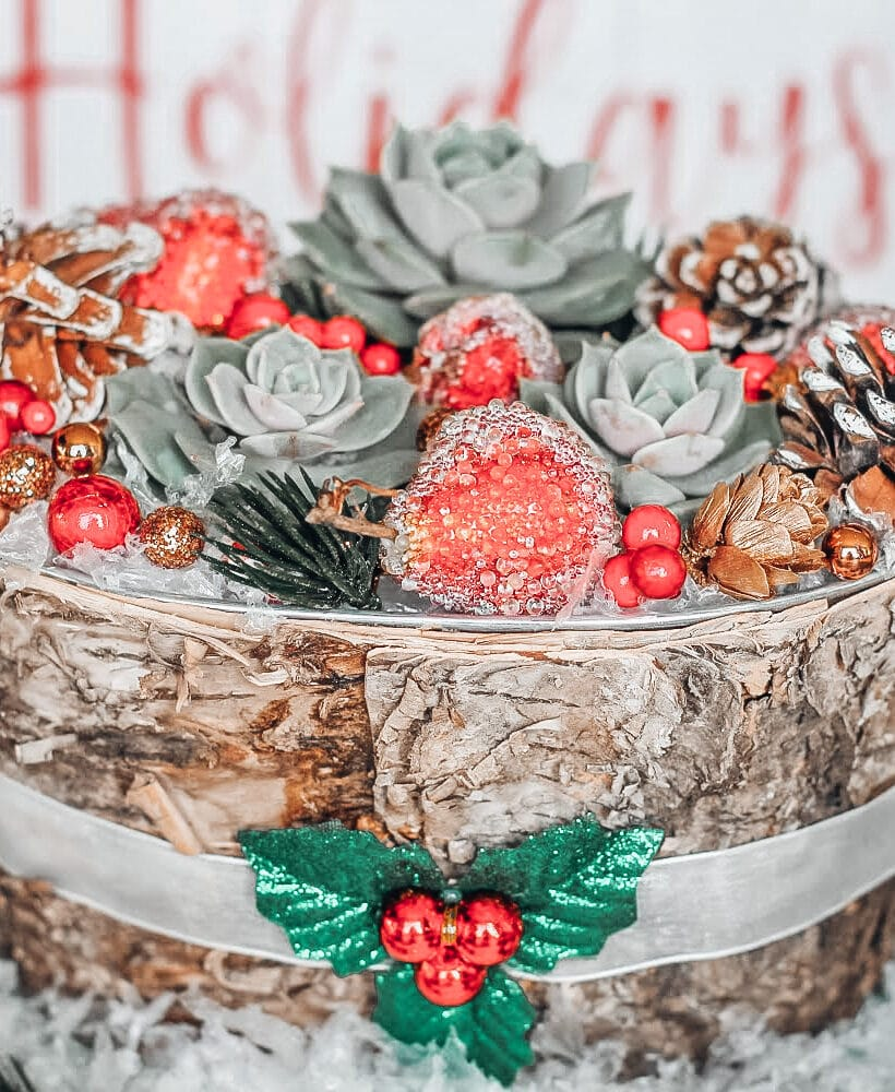 Succulents Christmas Craft