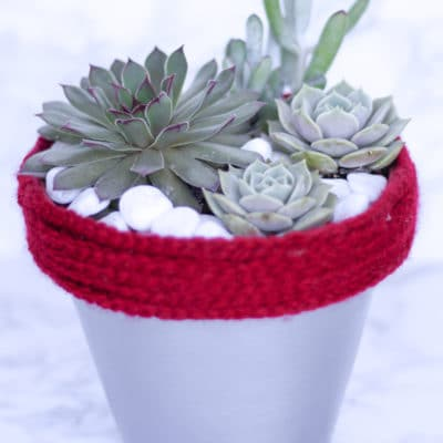 Fertilizing Succulents: Doing it the Right Way for Optimum Results