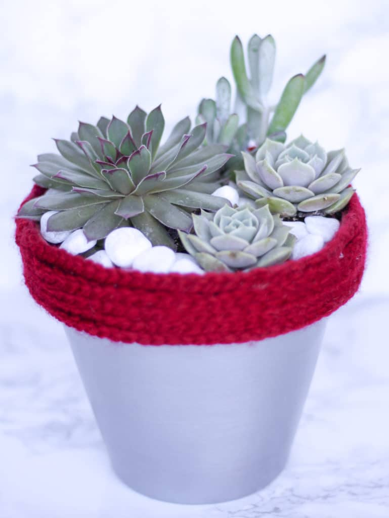 Learn how to care for succulents with this easy guide!