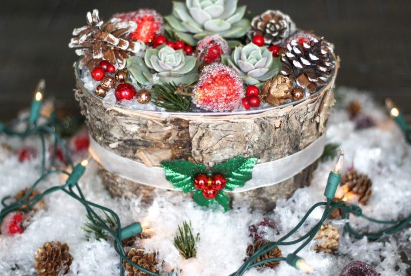 Christmas succulent centerpiece