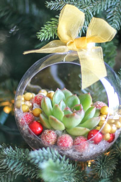 DIY Christmas Ornaments with Live Succulents