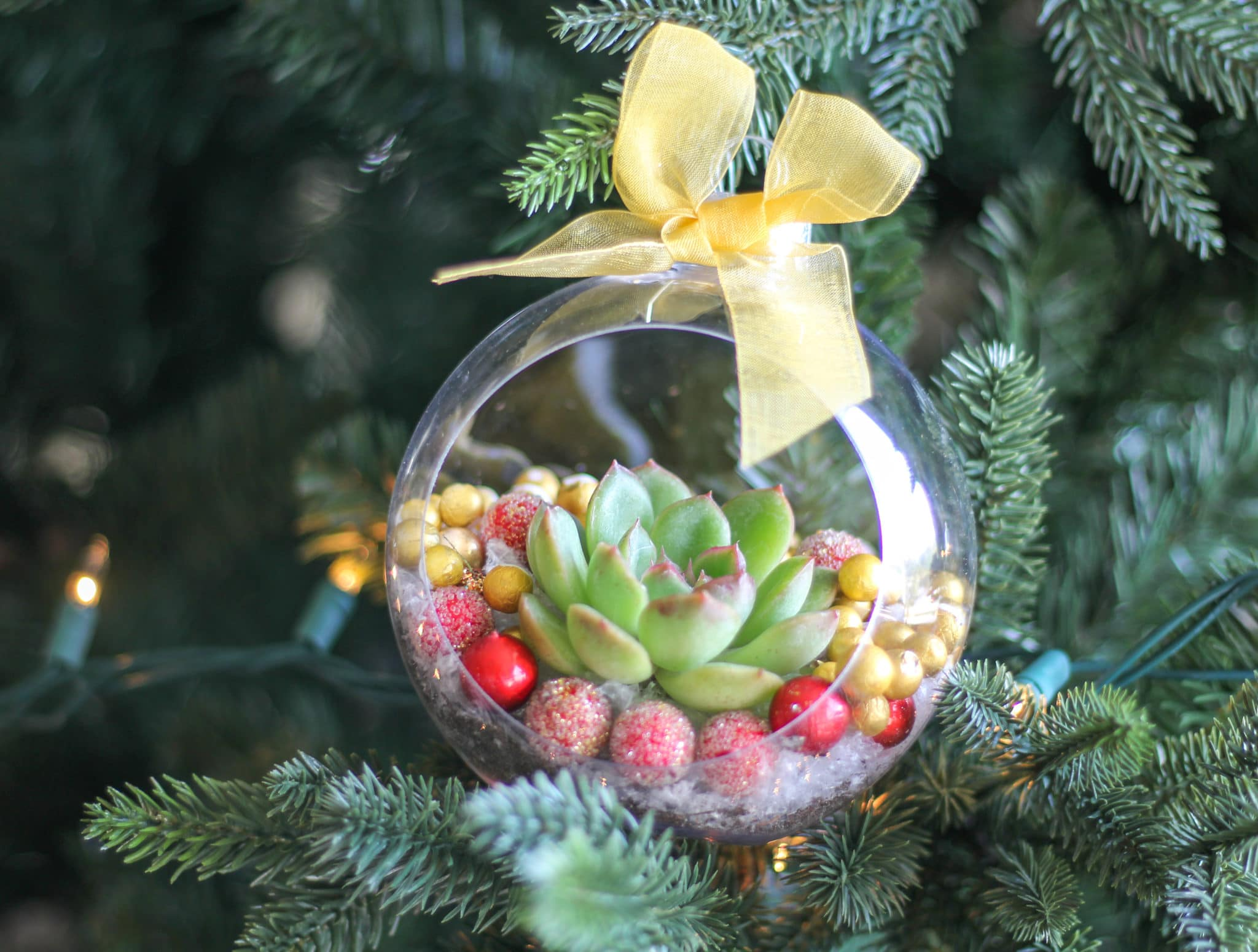 Diy Christmas Ornaments With Live Succulents Natalie Linda