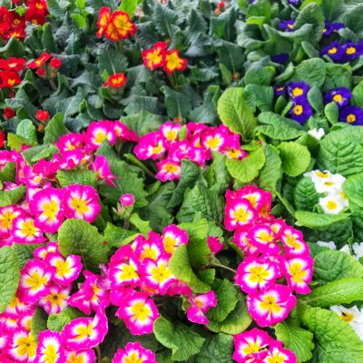 The Important Differences Between Annuals vs Perennials: Learn Why You Should Plant Both in Your Garden