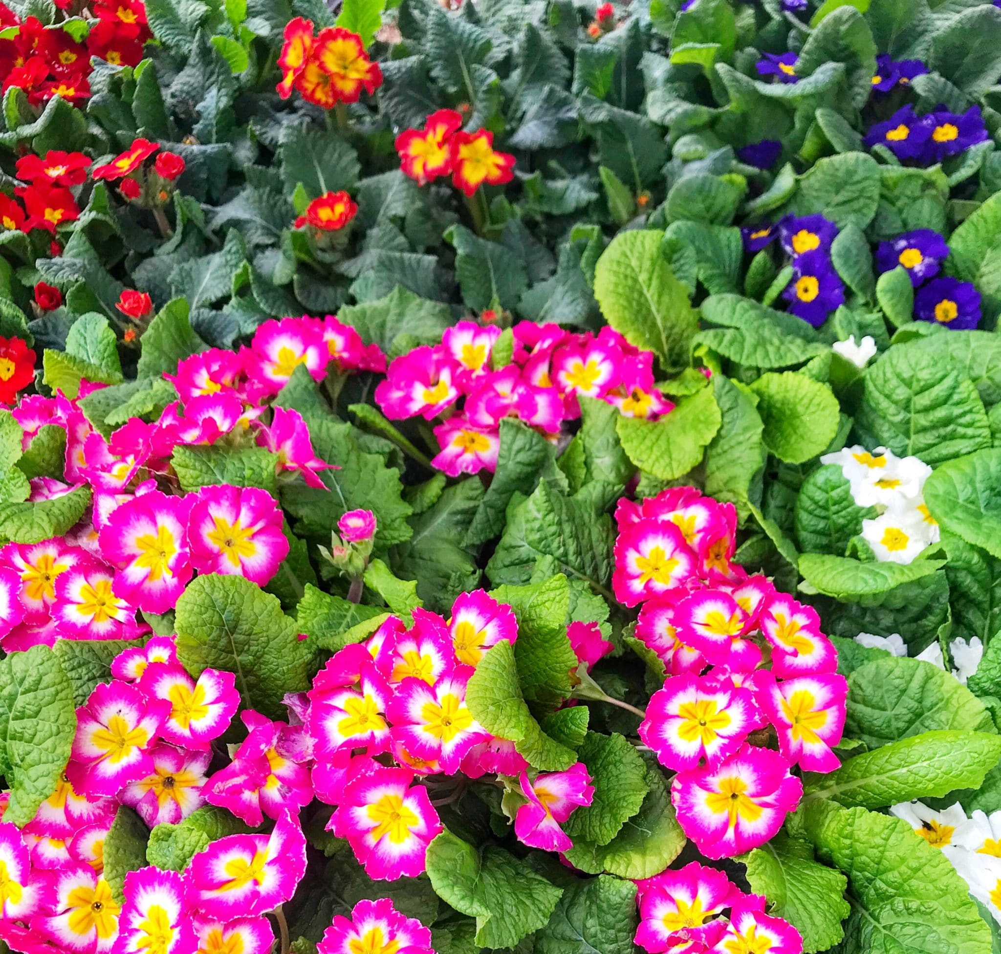 The Important Differences Between Annuals Vs Perennials