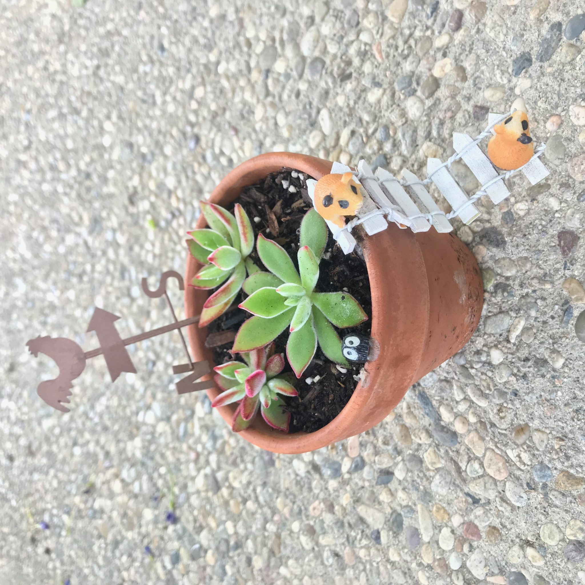 How To Use Succulents To Make A Beautiful Fairy Garden For
